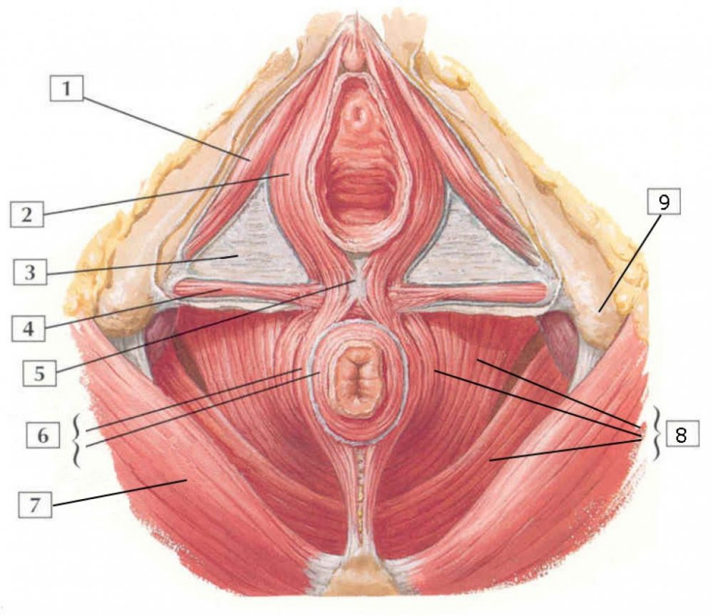 pelvic floor muscle dysfunction interstitial cystitis